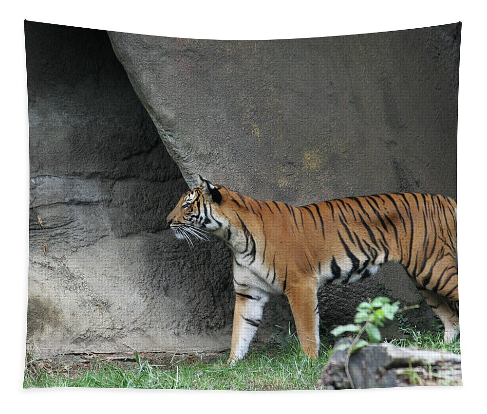 Prowling Tiger Tapestry featuring the photograph Prowling Tiger by Judy Whitton