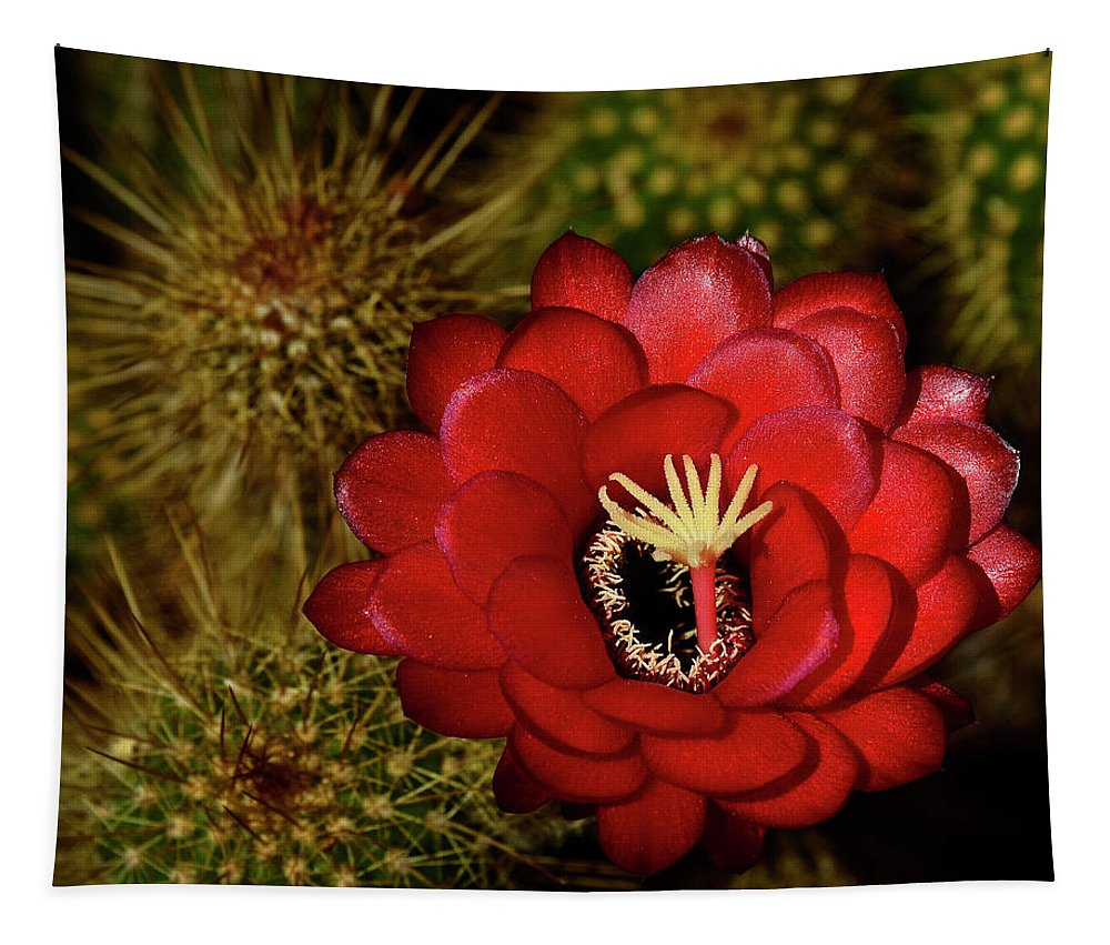 Red Torch Cactus Tapestry featuring the photograph Pure Red by Saija Lehtonen