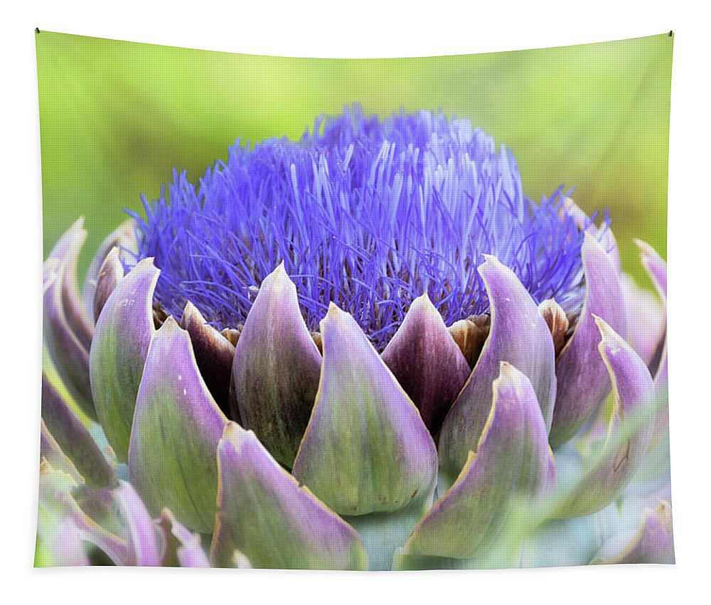 Artichoke Tapestry featuring the photograph Purple Artichoke Flower by Saija Lehtonen