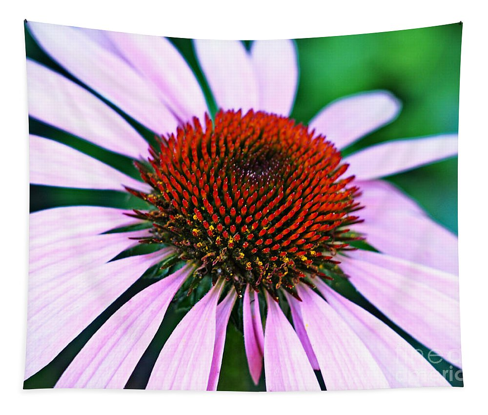 Purple Tapestry featuring the photograph Purple Coneflower Close-up by Gary Richards