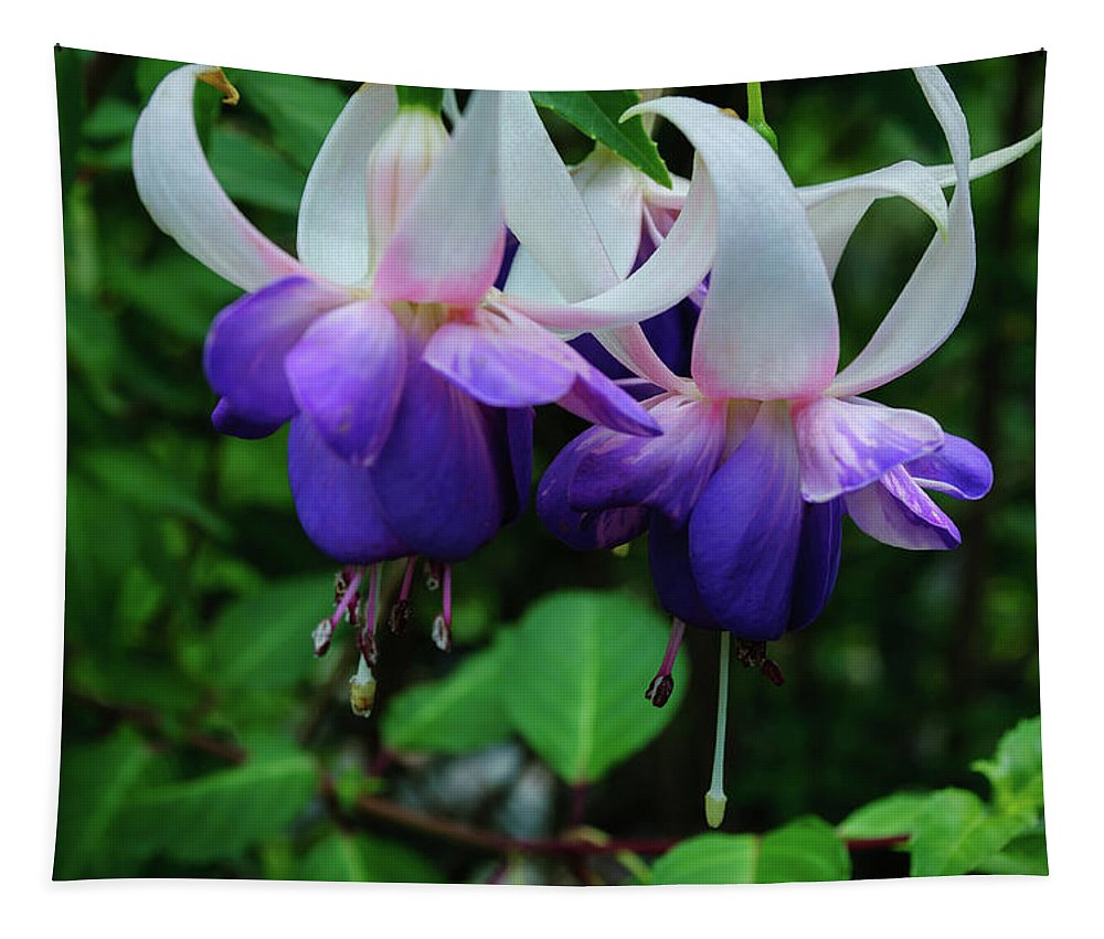 Fuchsia Tapestry featuring the photograph Purple Fuschia by Tikvah's Hope