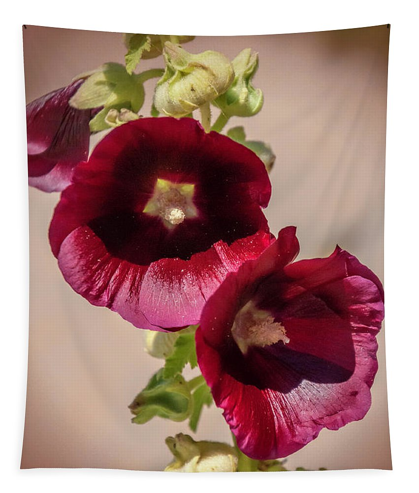 Purple Hollyhock Duo Tapestry featuring the photograph Purple Hollyhock Duo by Phyllis Taylor
