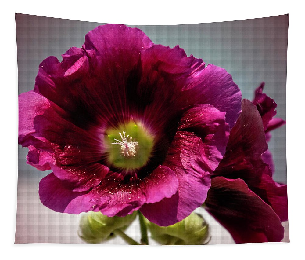 Purple Hollyhock Tapestry featuring the photograph Purple Hollyhock by Phyllis Taylor