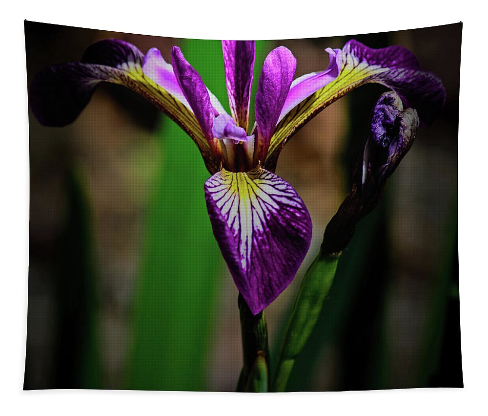 Floral Tapestry featuring the photograph Purple Iris by Tikvah's Hope