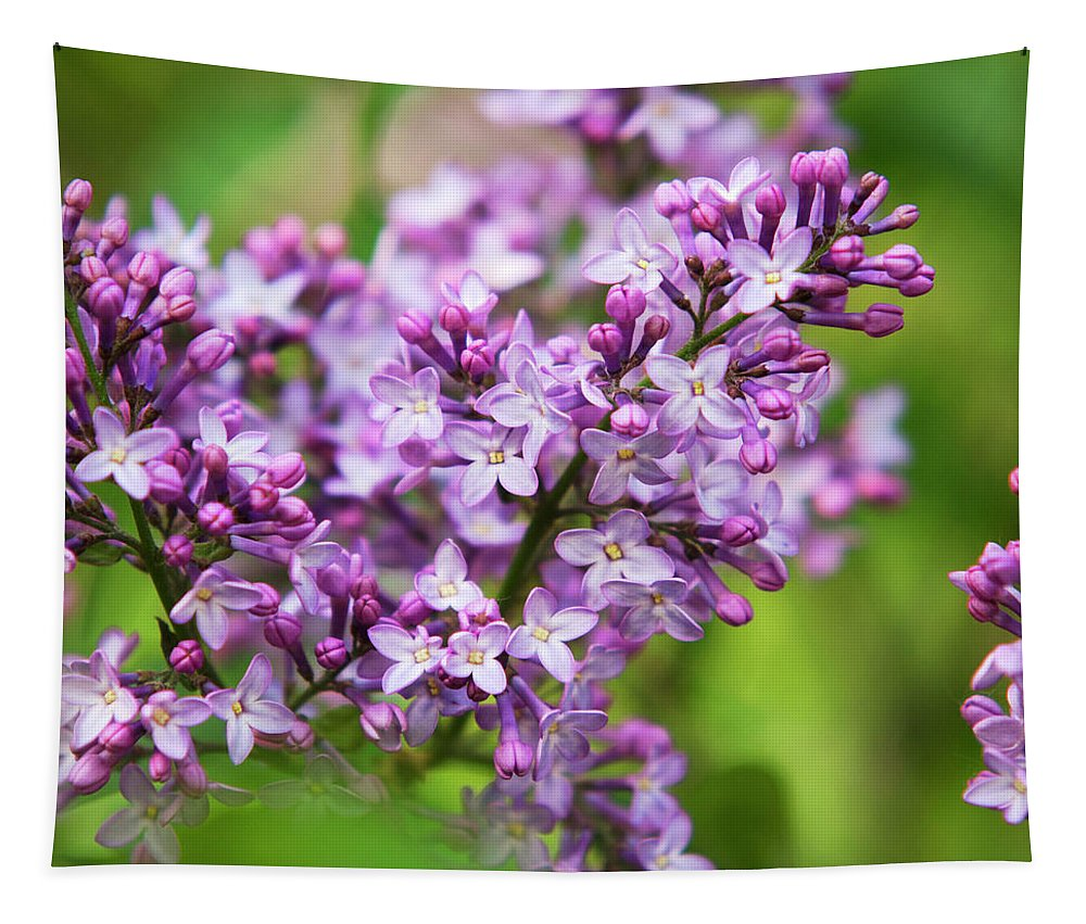Lilacs Tapestry featuring the photograph Purple Lilac Flowers by Christina Rollo