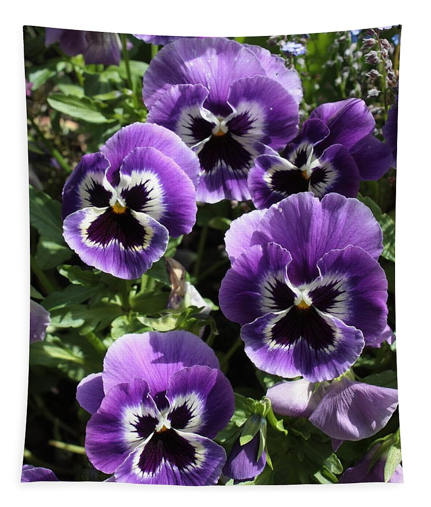 Purple Tapestry featuring the photograph Purple Pansies by Carol Groenen