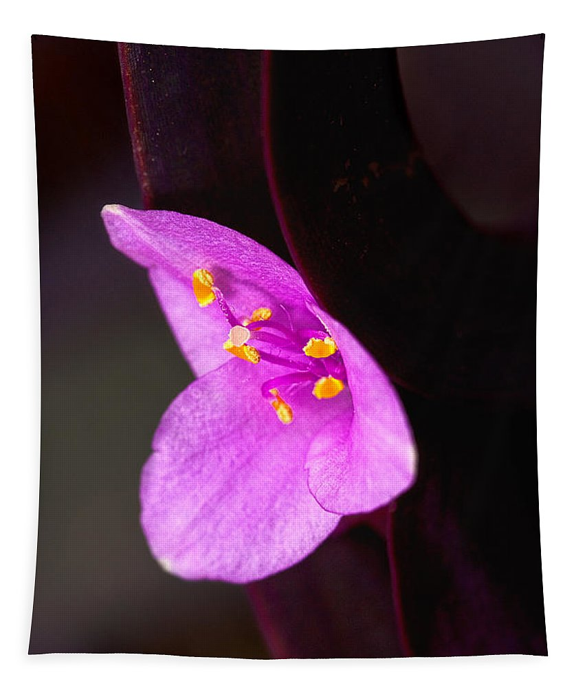 Flower Tapestry featuring the photograph Purple Queen by Christopher Holmes