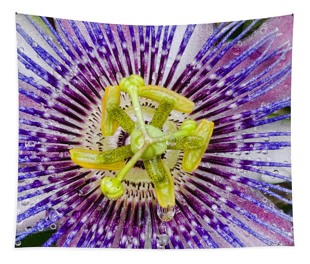 Passion Tapestry featuring the photograph Purple Radial by Christopher Holmes