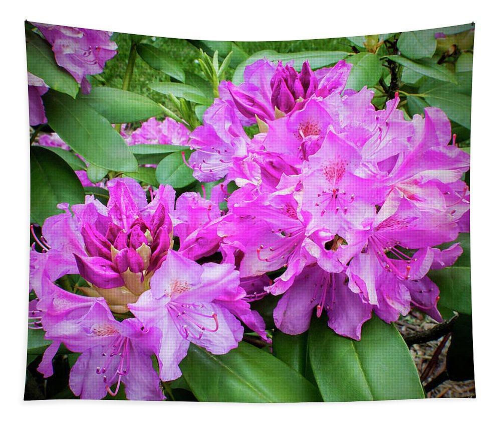 2d Tapestry featuring the photograph Purple Rhododendron by Brian Wallace
