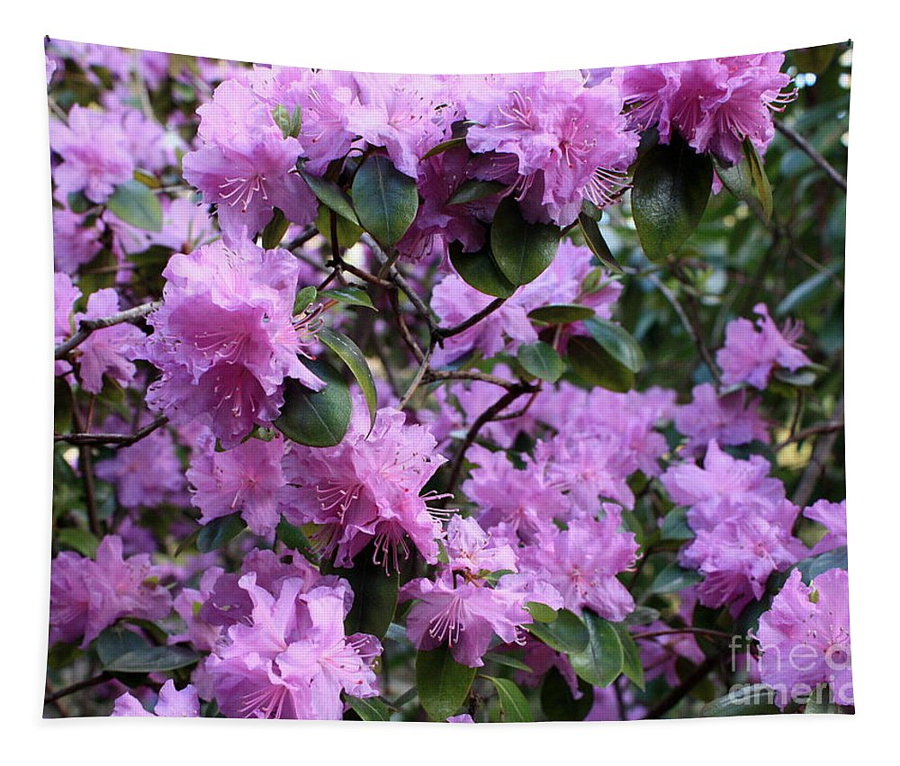 Spring Tapestry featuring the photograph Purple Rhododendrons by Carol Groenen