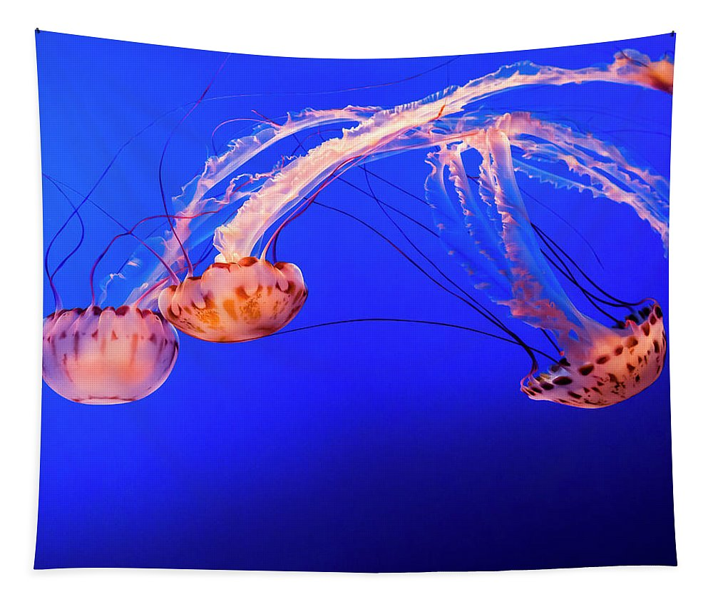 California Tapestry featuring the photograph Purple Striped Jelly by Sean O'Cairde