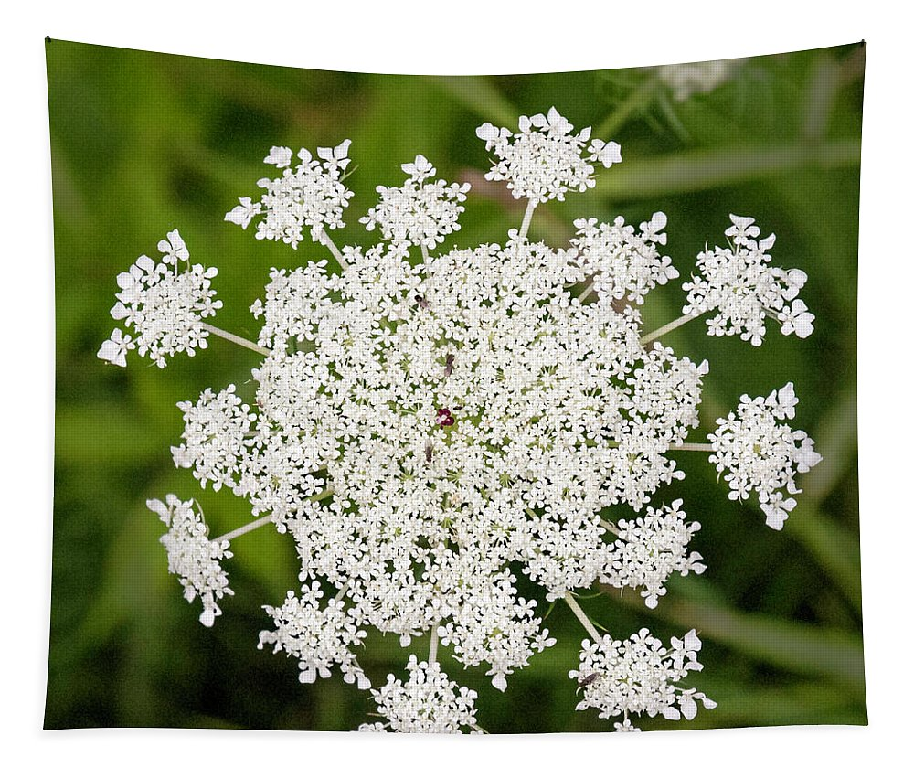 Queen Annes Lace No 2 Tapestry featuring the photograph Queen Anne's Lace No 2 by Phyllis Taylor