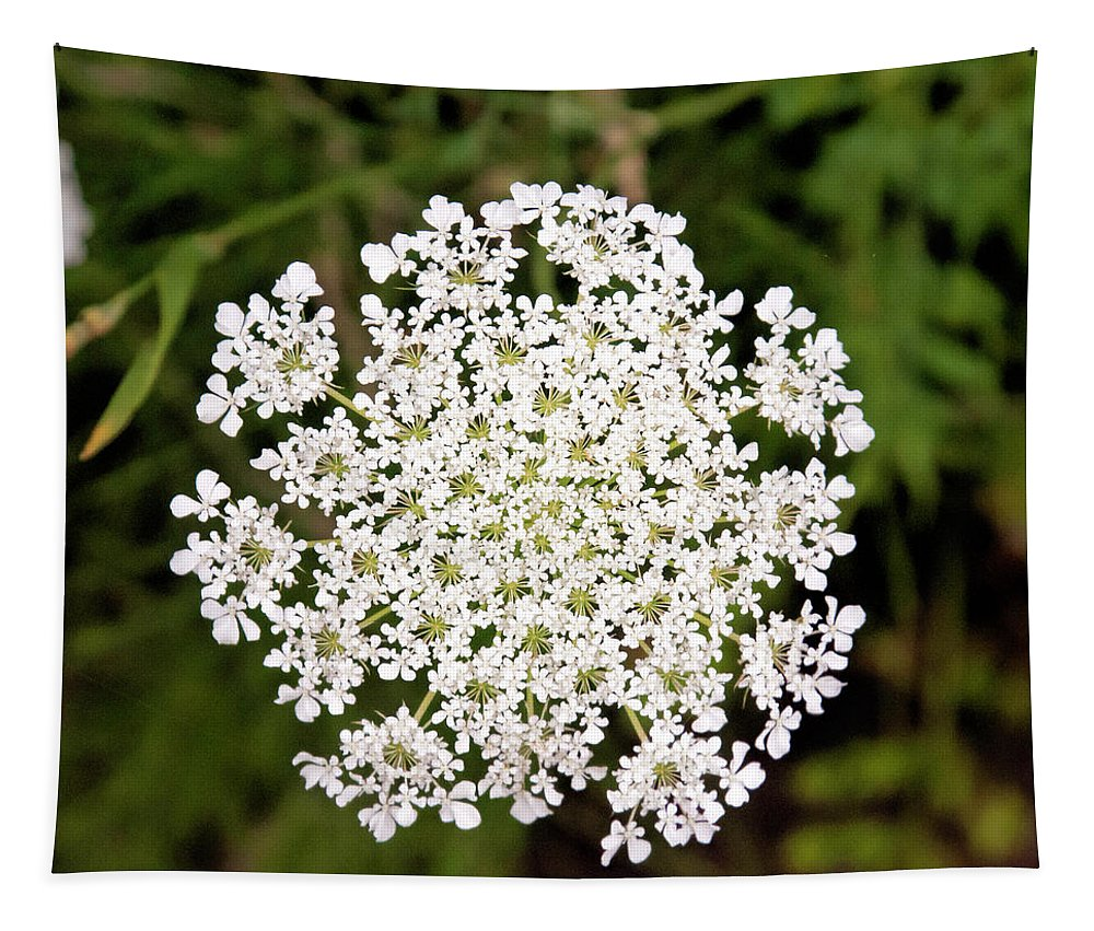 Queen Annes Lace Tapestry featuring the photograph Queen Anne's Lace by Phyllis Taylor