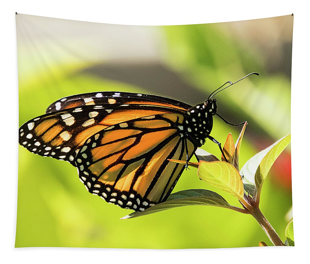 Butterfly Tapestry featuring the photograph Queen Butterfly by Bob Slitzan