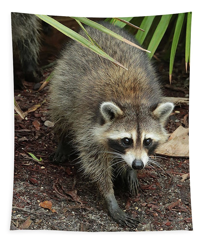 Raccoon Tapestry featuring the photograph Raccoon Bandit by Carol Groenen