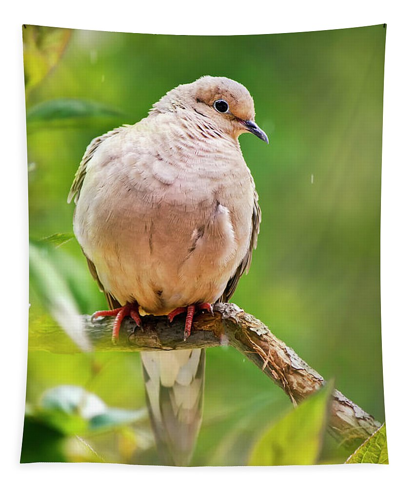 Dove Tapestry featuring the photograph Rain Dove by Christina Rollo