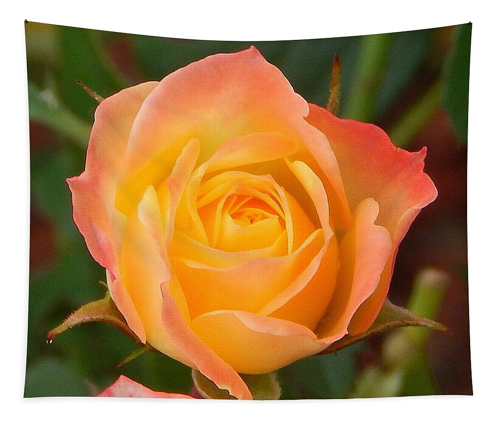 Rainbow Rose Tapestry featuring the photograph Rainbow Rose by Karen Cook