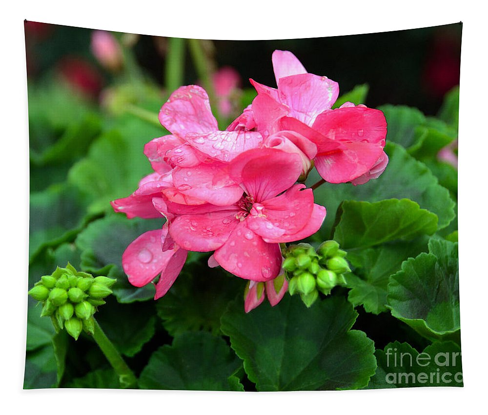 Geranium Tapestry featuring the photograph Raindrops On Pink Geranium by Catherine Sherman