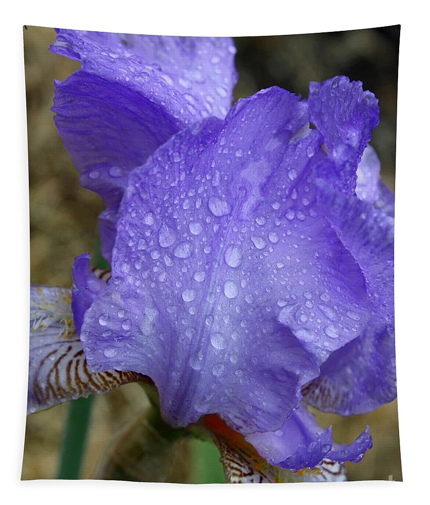 Blue Tapestry featuring the photograph Rainy Day Iris by Carol Groenen