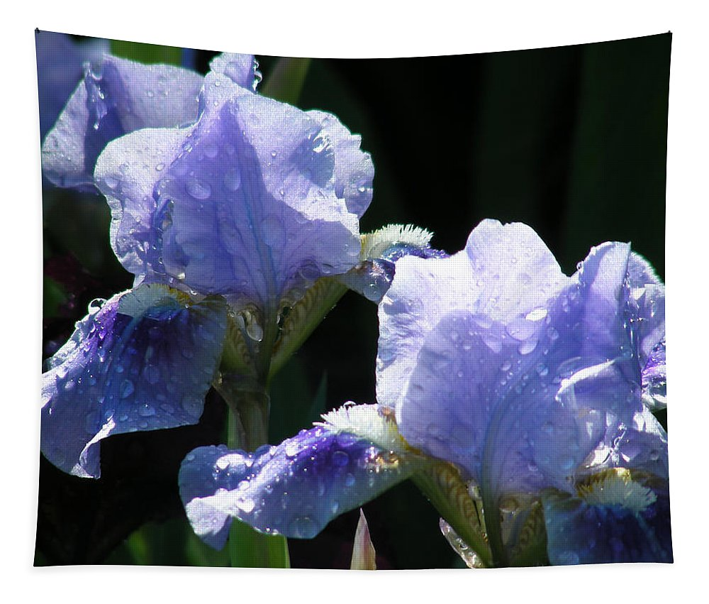 Flower Tapestry featuring the photograph Rainy Irises by Mary Lane