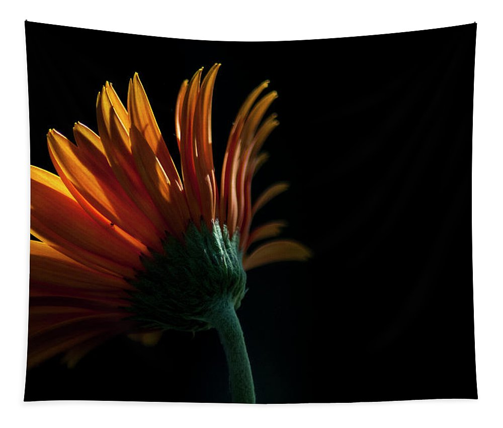 Daisy Tapestry featuring the photograph Reach For The Sun by Annette Persinger