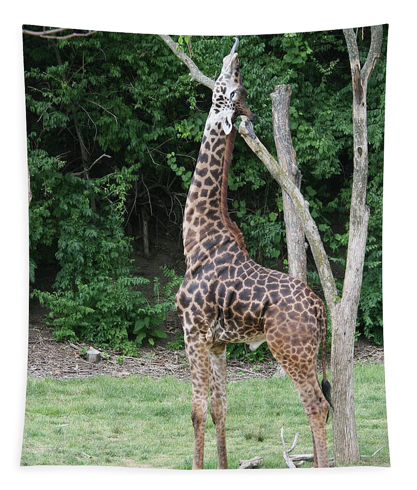 Masai Giraffe Tapestry featuring the photograph Reaching by Judy Whitton