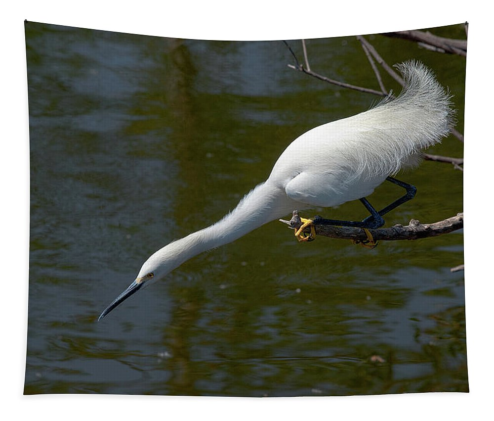 Snowy Egret Tapestry featuring the photograph Ready..set.. by Christopher Holmes