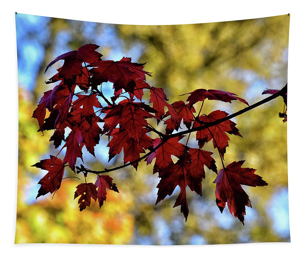 Autumn Tapestry featuring the photograph Red And Gold by Maria Keady