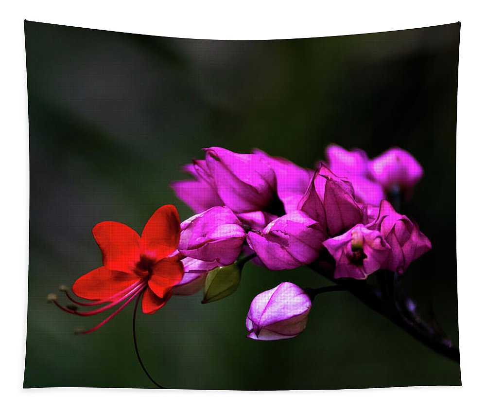 Jay Stockhaus Tapestry featuring the photograph Red And Pink by Jay Stockhaus