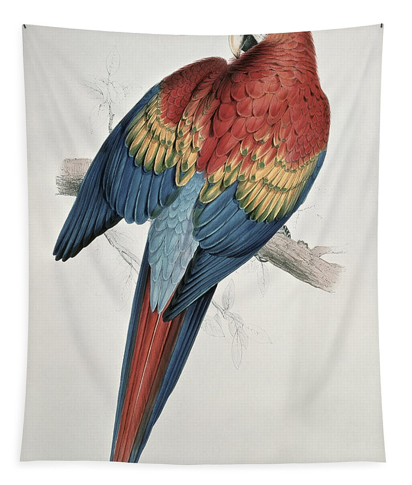 Red Tapestry featuring the painting Red And Yellow Macaw by Edward Lear