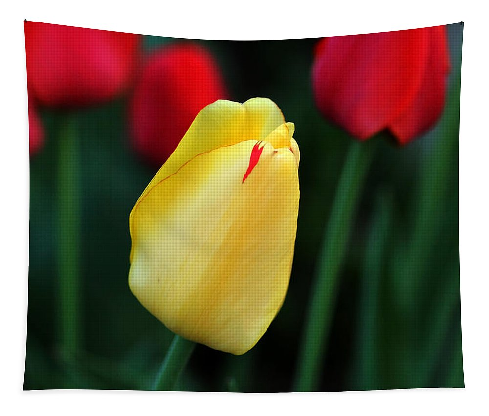Tulips Tapestry featuring the photograph Red And Yellow Tulips by Debbie Oppermann