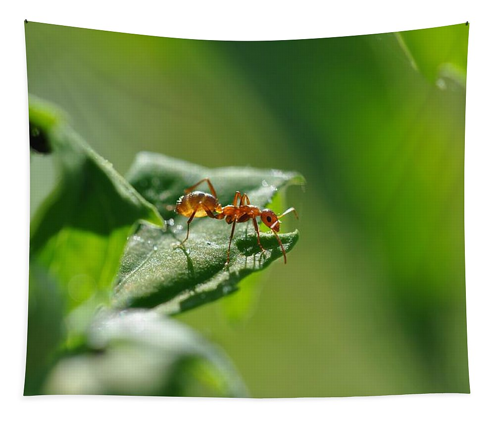 Bug Tapestry featuring the photograph Red Ant On Leaf by Barbara Treaster