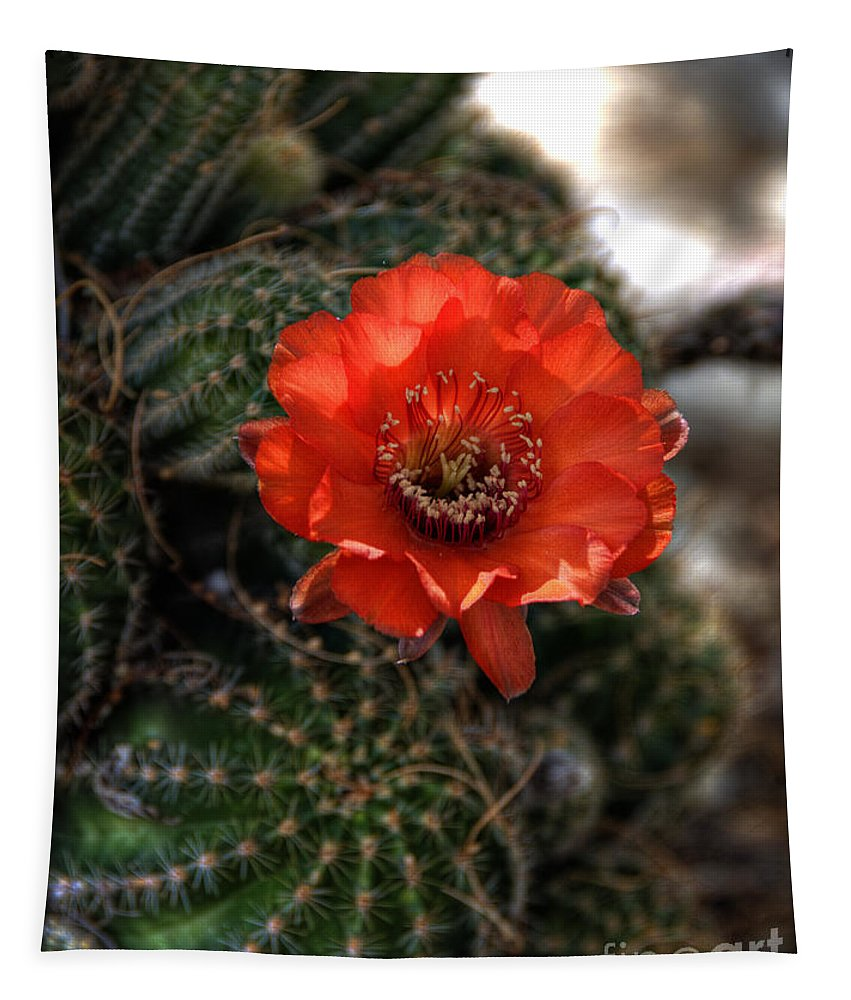 Red Cactus Flower Tapestry featuring the photograph Red Cactus Flower by Saija Lehtonen