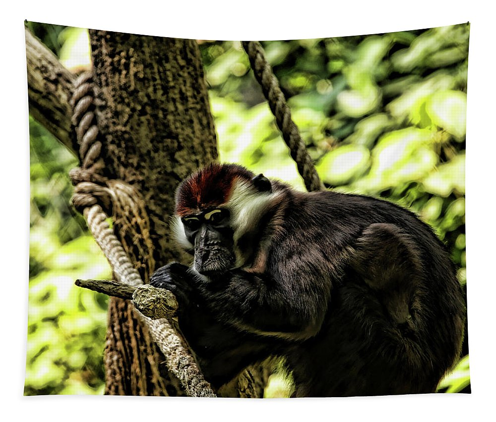 Monkey Tapestry featuring the photograph Red-capped Mangabey by Judy Vincent