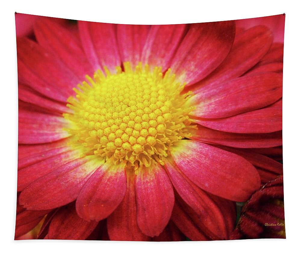 Chrysanthemum Tapestry featuring the photograph Red Chrysanthemum by Christina Rollo