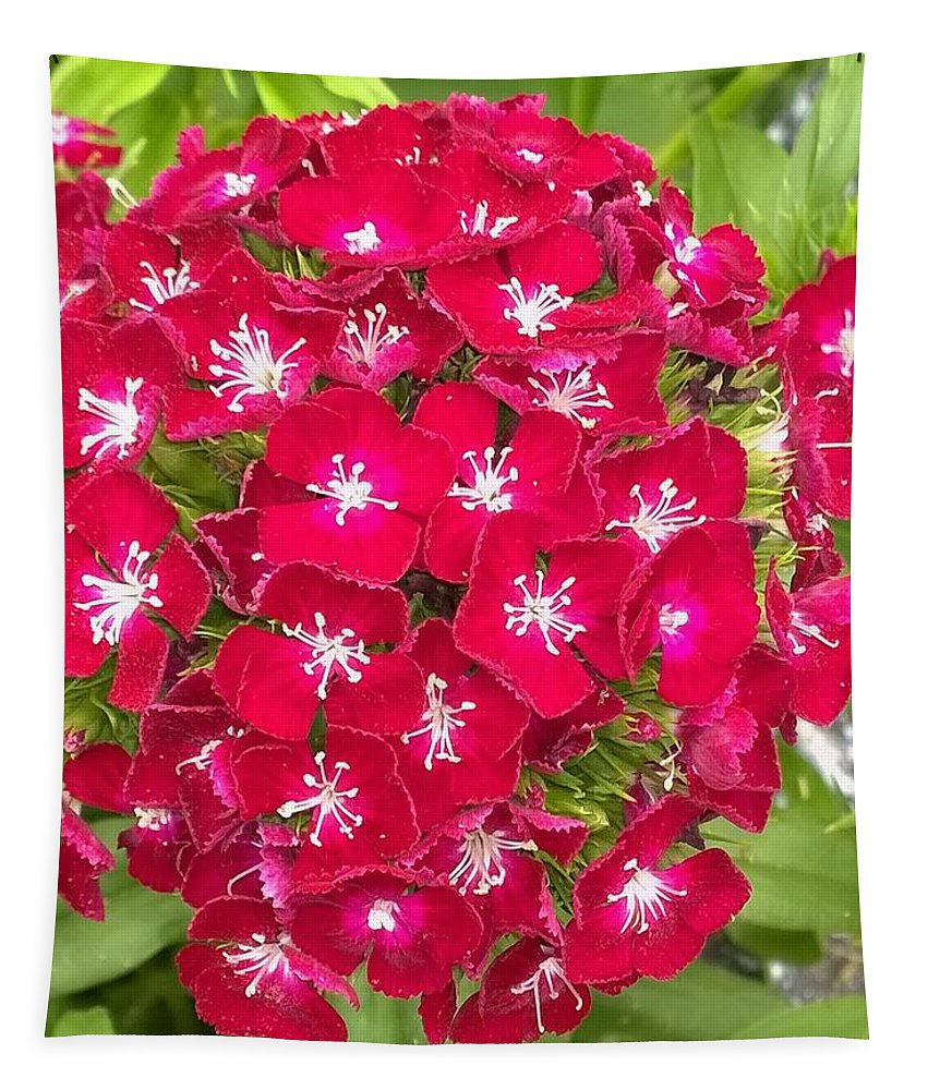 Flowers Tapestry featuring the photograph Red Dianthus by Gayle Miller
