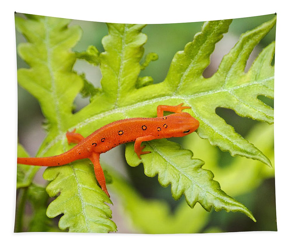 Red Eft Tapestry featuring the photograph Red Eft Eastern Newt by Christina Rollo