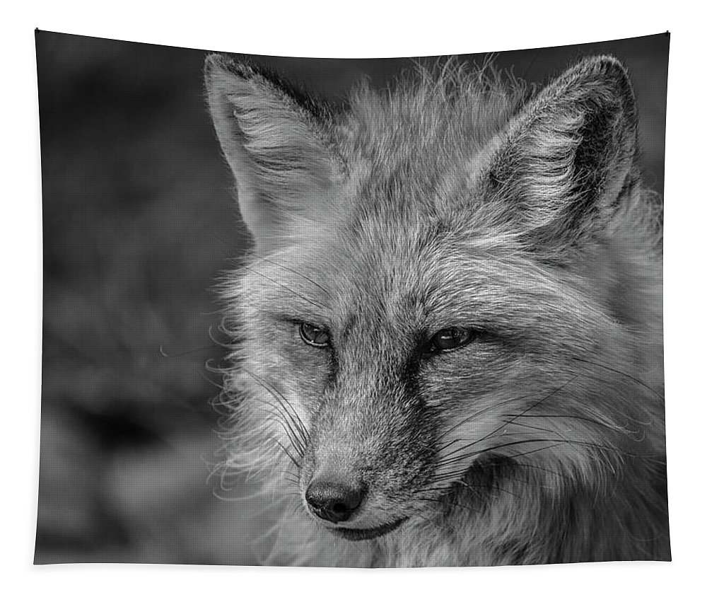 Tl Wilson Photography Tapestry featuring the photograph Red Fox In Black And White by Teresa Wilson
