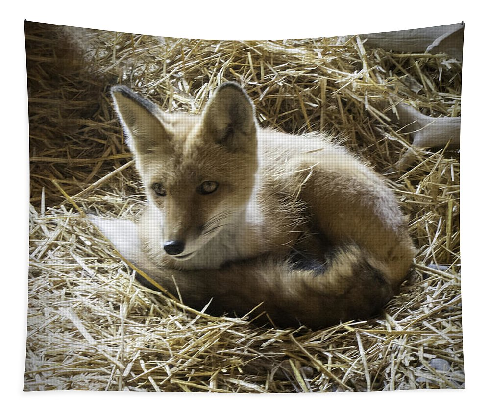 Red Fox Tapestry featuring the photograph Red Fox by Phyllis Taylor
