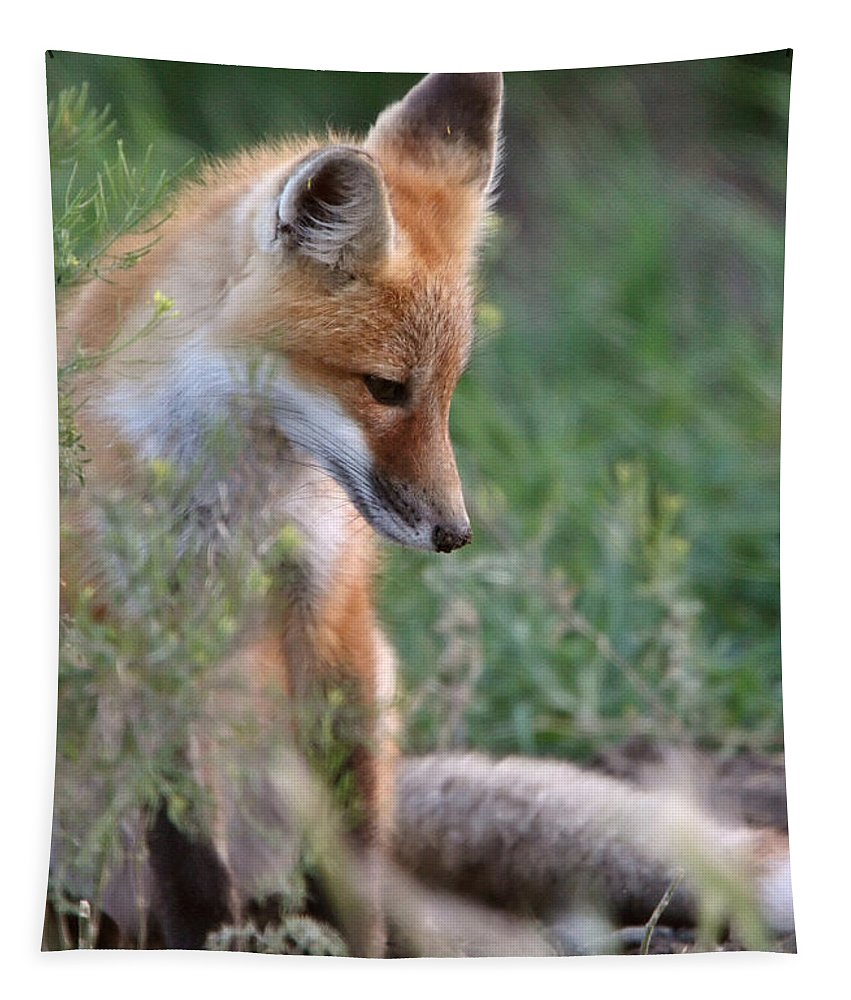 Red Fox Tapestry featuring the digital art Red Fox Pup Outside Its Den by Mark Duffy