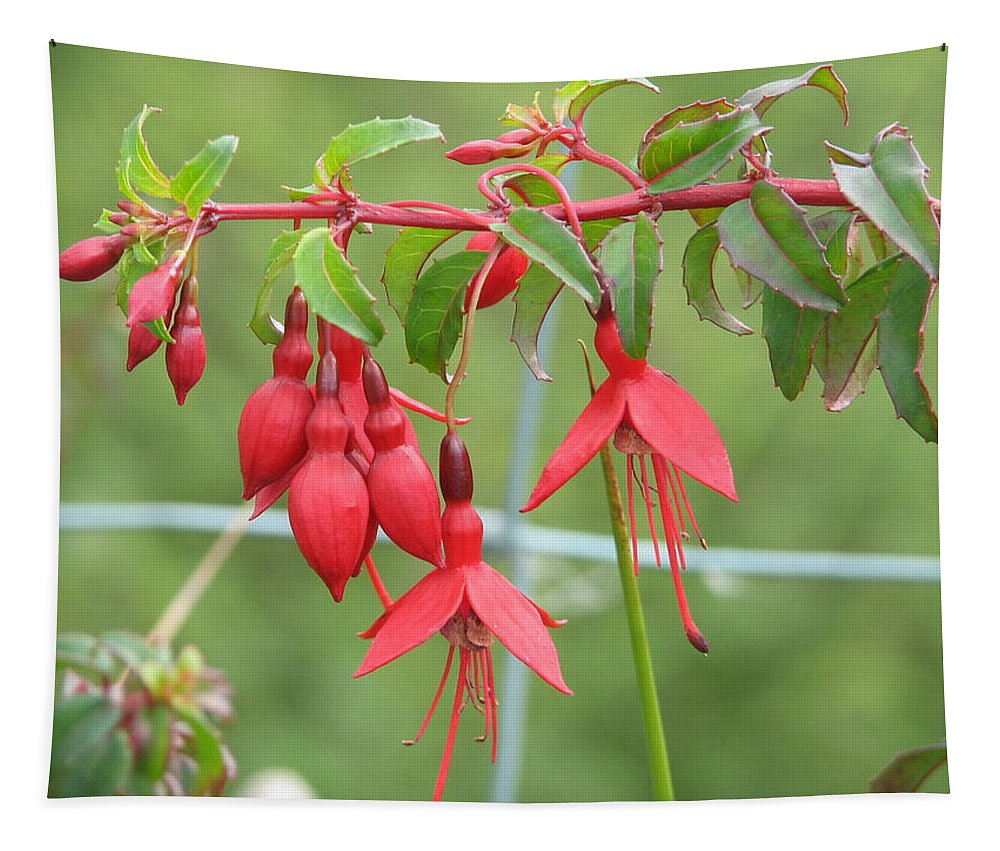 Fresia Tapestry featuring the photograph Red Fresia by Kelly Mezzapelle