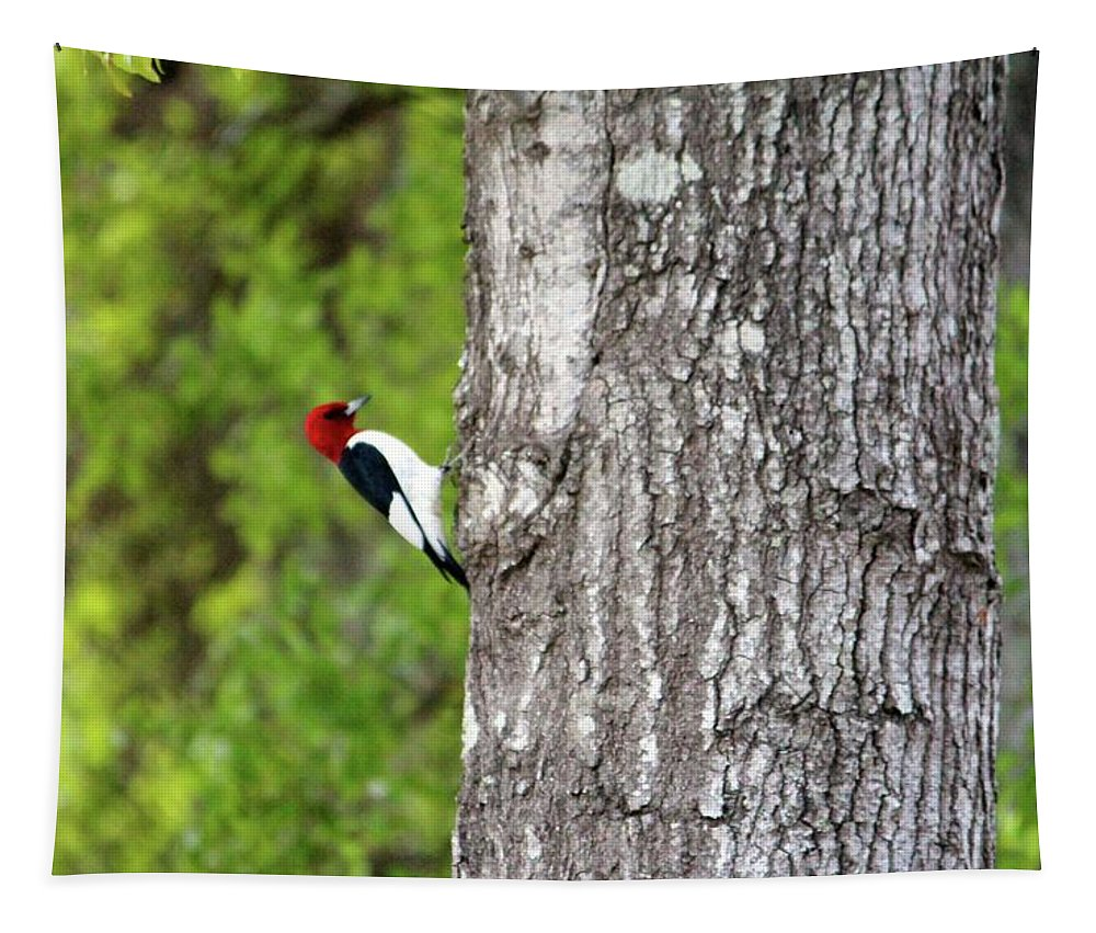 Red-headed Tapestry featuring the photograph Red Head Bird by Cynthia Guinn