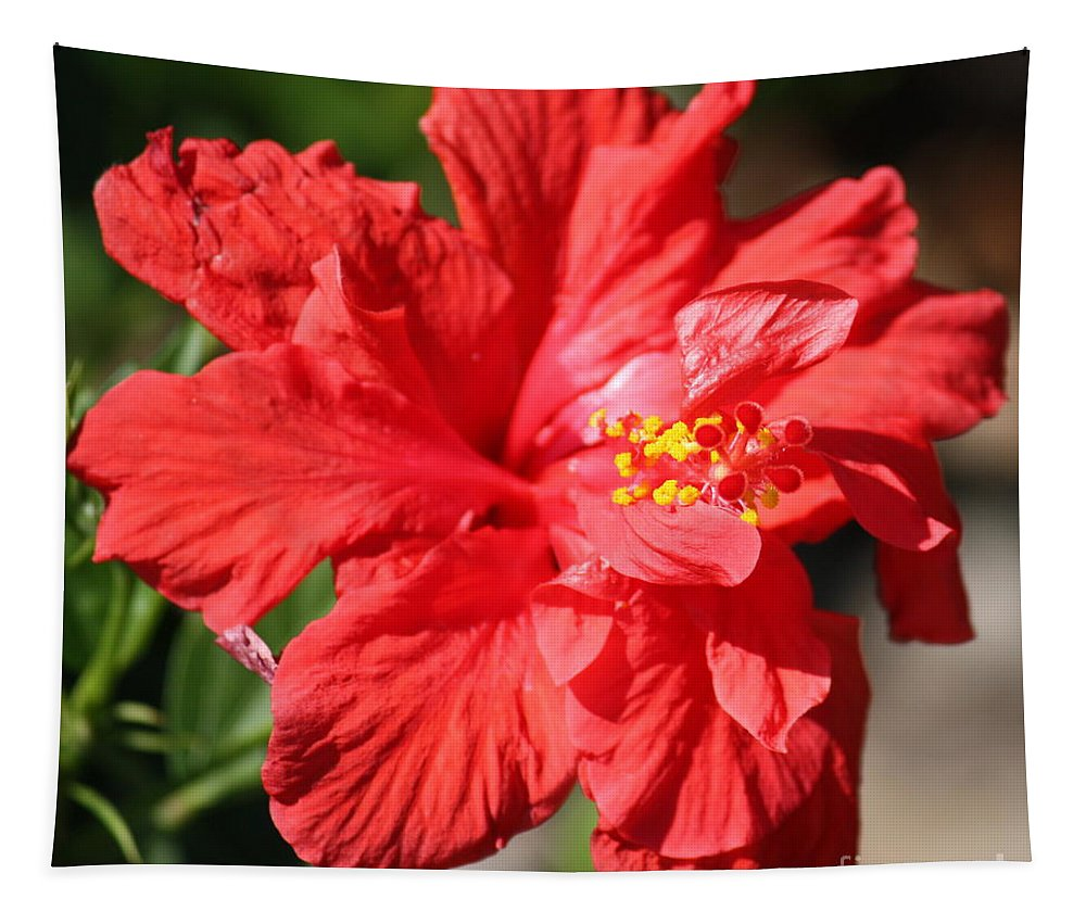 Red Tapestry featuring the photograph Red Hibiscus Square by Carol Groenen
