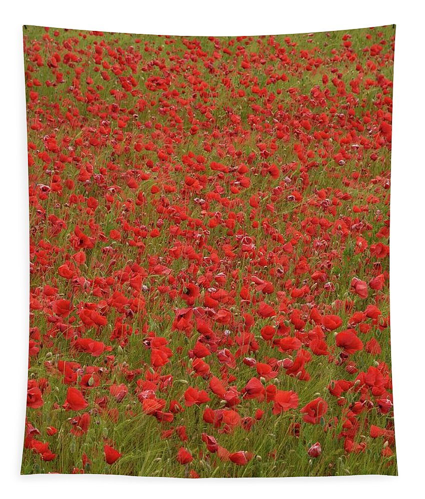 Lehtokukka Tapestry featuring the photograph Red Poppies 2 by Jouko Lehto
