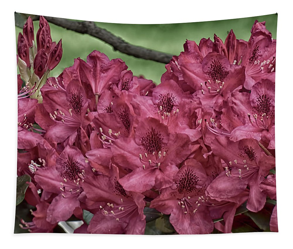 Rhododendrons Tapestry featuring the photograph Red Rhodies by Leslie Montgomery