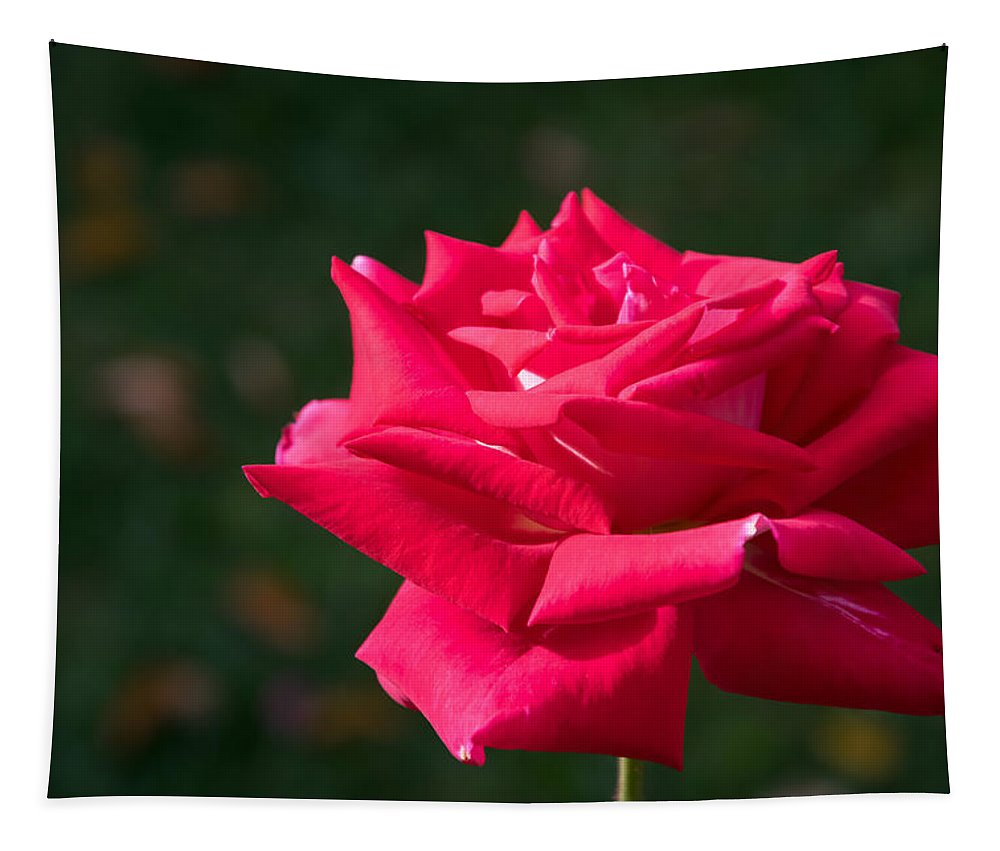 Flower Tapestry featuring the photograph Red Rose Profile by Robert VanDerWal