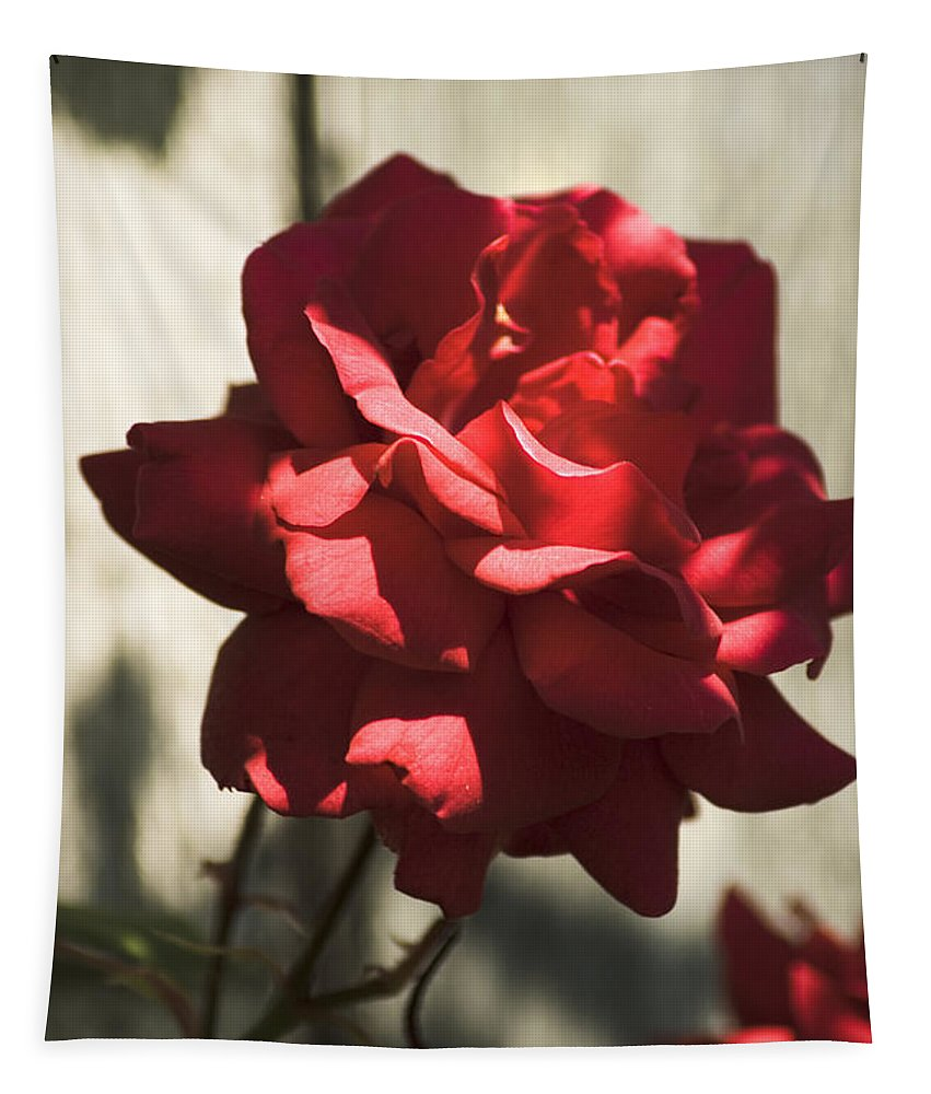Red Tapestry featuring the photograph Red Rose by Yulia Kazansky