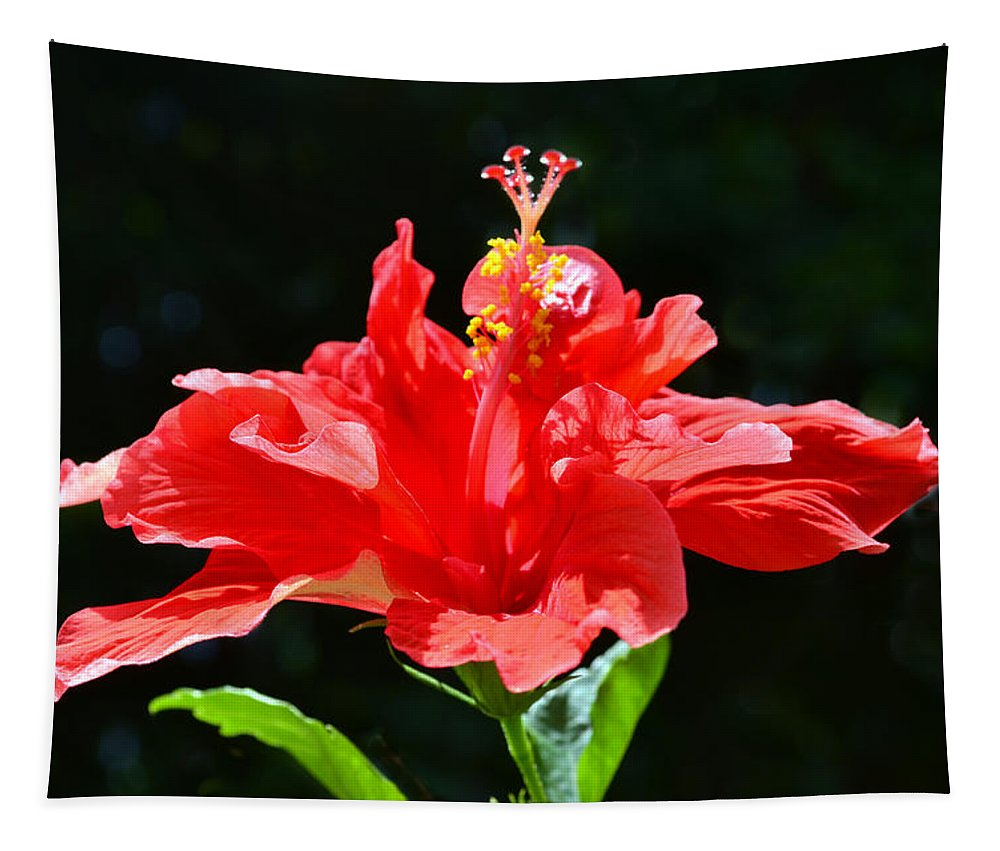 Hibiscus Tapestry featuring the photograph Red by Sandi OReilly