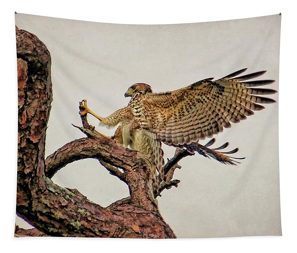 Red-shouldered Hawk Tapestry featuring the photograph Red-shouldered Hawk Landing 2 by HH Photography of Florida