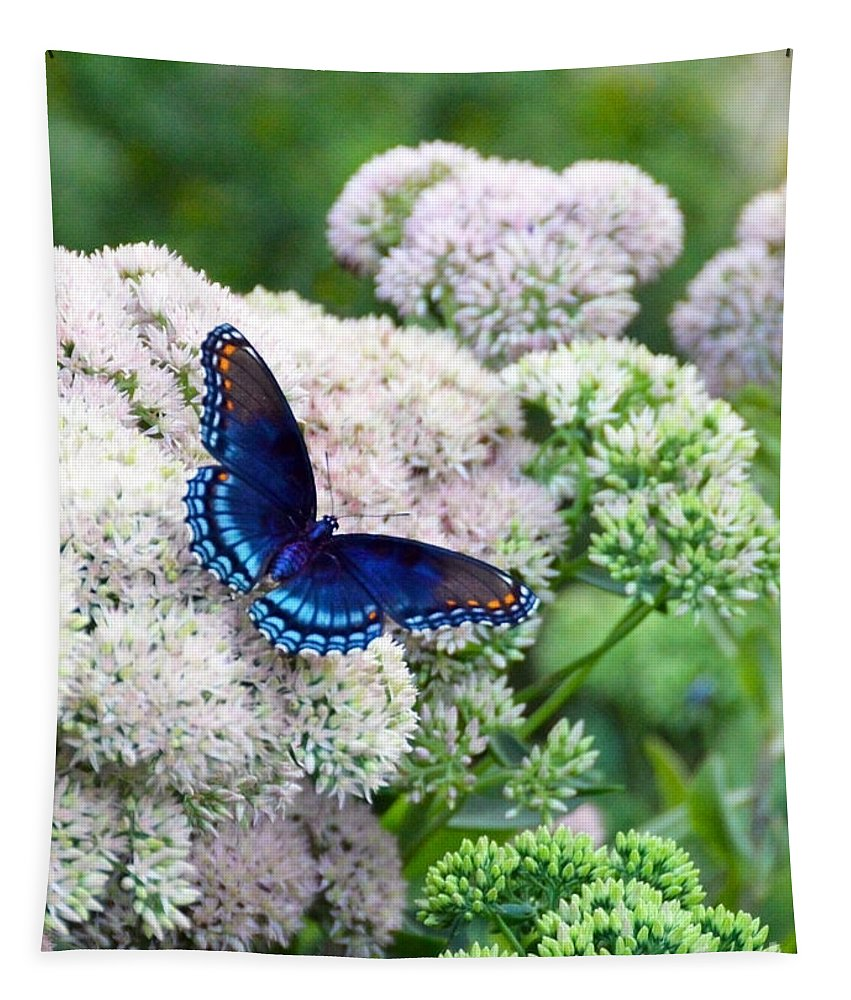 Red Spotted Purple Tapestry featuring the photograph Red Spotted Purple Butterfly On Sedum by Catherine Sherman